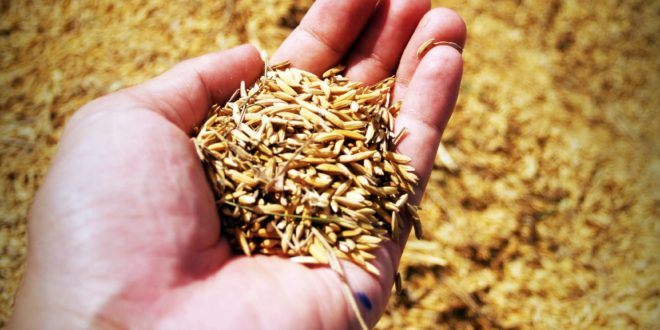 agricultural agriculture asia barley