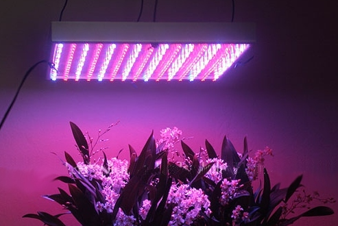 What are the best led grow lights in Canada