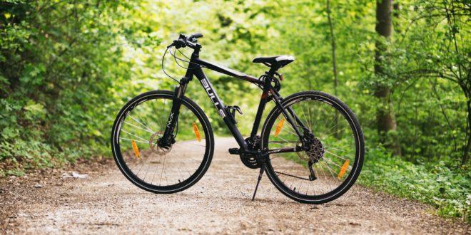 forest bike bulls