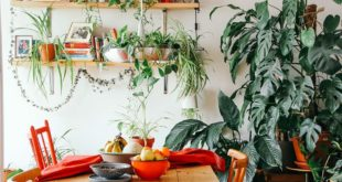How To Use Cascading Plants to Transform Your Space