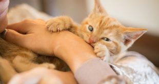 <strong>Reasons Why Cats Like to Scratch and How to Avoid</strong>