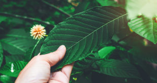 Tips to buy the best Kratom