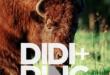 "Didi + Ping Releases Debut Single ""Buffalo Jump"""