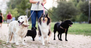 How To Find The Best Dog Walker In San Francisco California