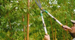 <strong>Advantages of Tree Removal Services You Must Know About</strong>