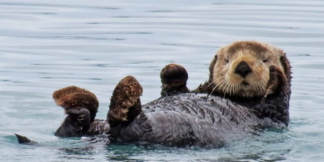 "Discovery Orders ""Otter Dynasty"" Series Described As ""Game of Thrones with Otters"""