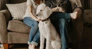 Five Things to Do With Your Pets When You Are on a Vacation