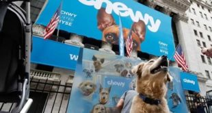 <strong>Best Chewy dog food brands article on natural feeding</strong>