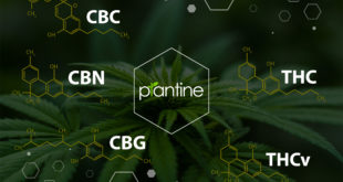 Cannabis CBG: The Most Important Molecular in All Vertebrates