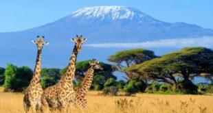 <strong>Breathtaking Experience of Kenya Tanzania Safari</strong>
