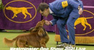 Watch Westminster Dog Show 2021 Live Stream Reddit Online
