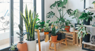 Bring an oasis of peace to your home with the flower and plant trends of 2021