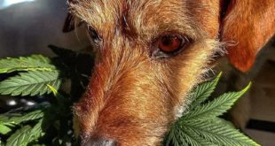 HELPING YOUR DOG DEAL WITH SEPARATION ANXIETY
