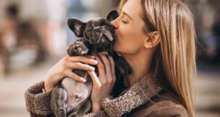 Things that Can Help You in Taking Care of a Bulldog