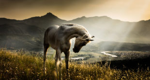Majestic frames, by Horse Photographer Bengin Ahmad