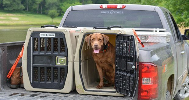 How to transport a dog safely?