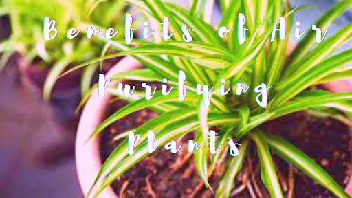 Mind-blowing Benefits of Buying Air Purifying Plants